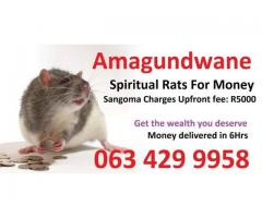 Spiritual rats or amagundwane are the one i use for a powerful money spells +27634299958