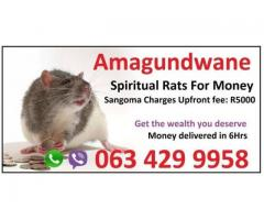 I have used money spell caster Africa called Baba Messe, a sangoma with spiritual rats +27634299958